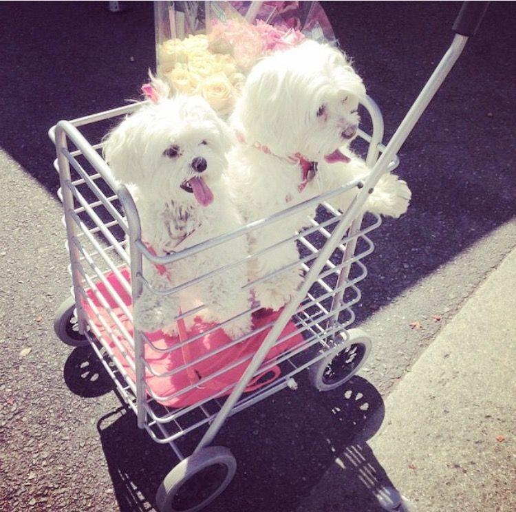 carrara pet stop   pet store   62 Market St, Carrara QLD 4211, Australia   0499558448 OR +61 499 558 448