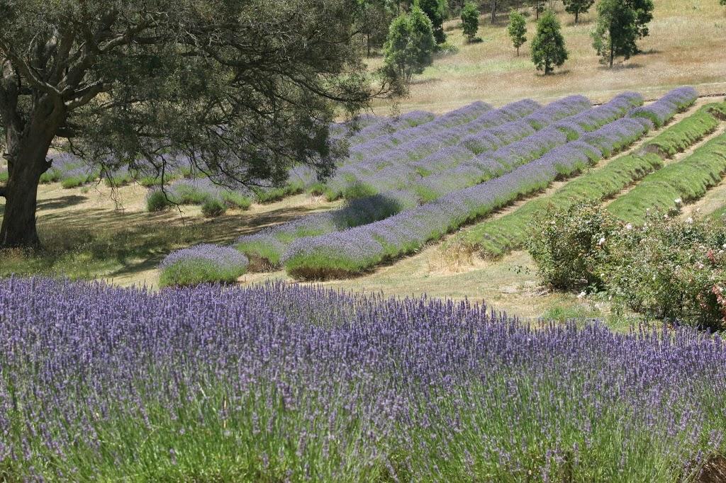 Yuulong Lavender Estate   cafe   58 Sharrocks Rd, Mount Egerton VIC 3352, Australia   0353689453 OR +61 3 5368 9453