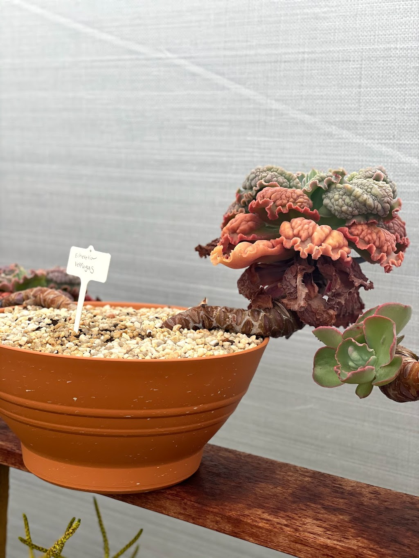 Succulents Australia | store | 429 Monbulk Rd, Monbulk VIC 3793, Australia