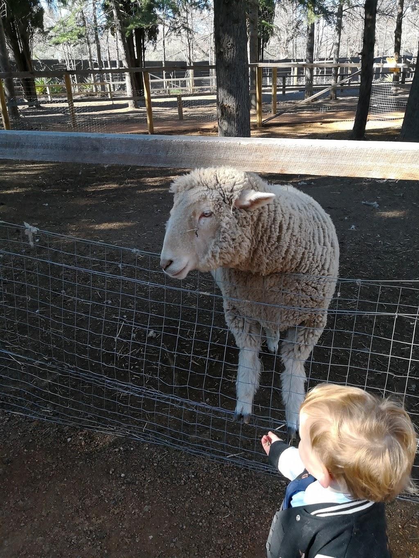 Weston Park Mini Railway   park   Yarralumla ACT 2600, Australia