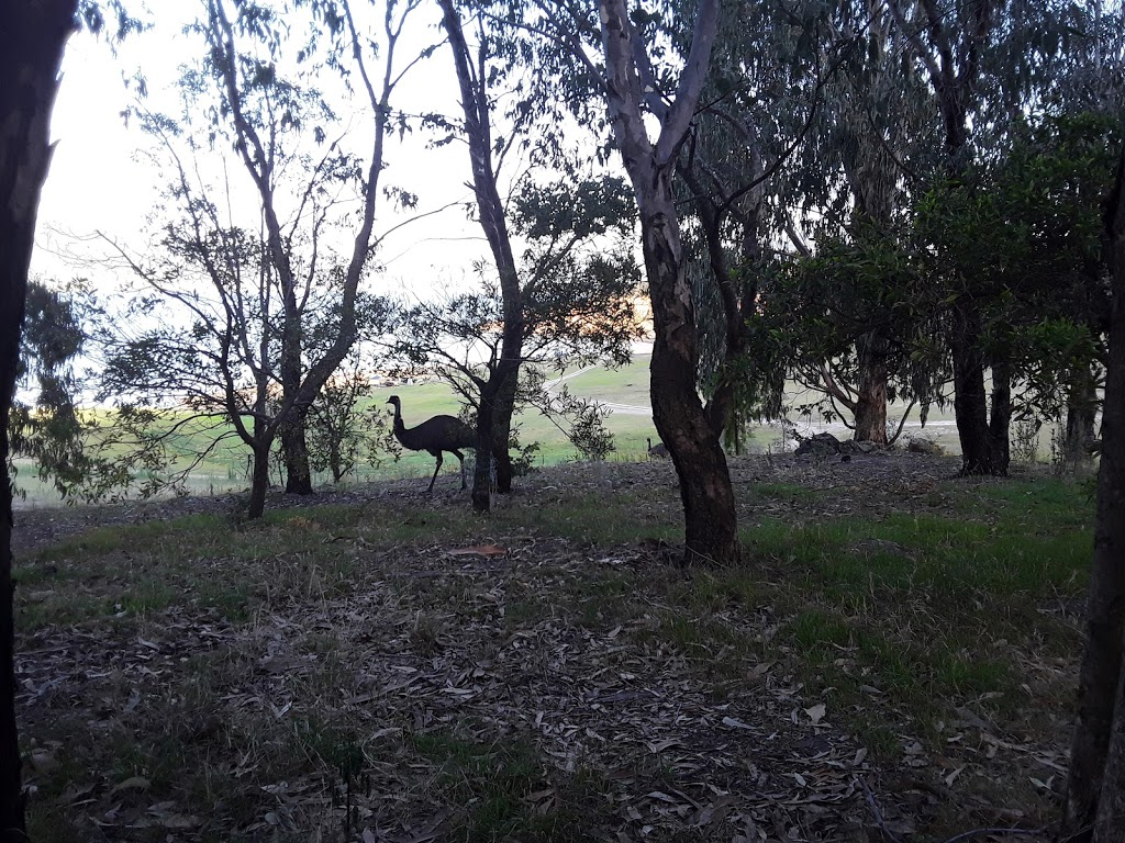 The Pines campground | campground | The Pines Access, Blowering NSW 2720, Australia | 0269477025 OR +61 2 6947 7025