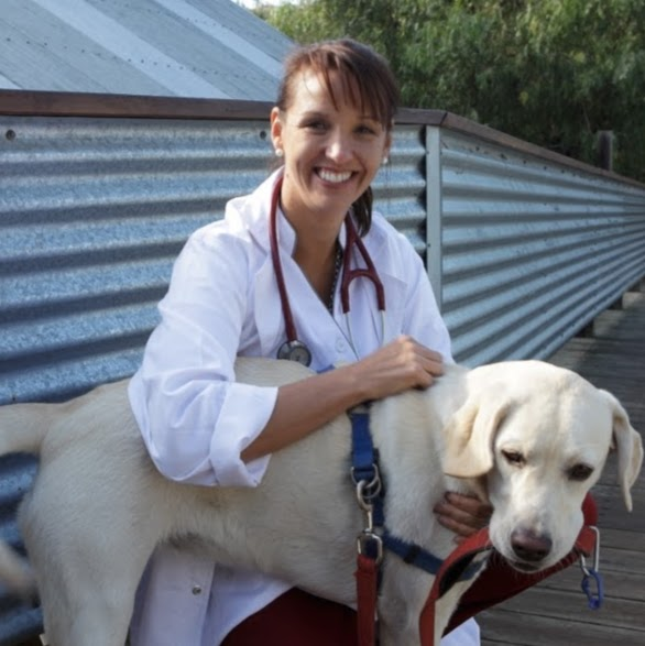 i-Vet Online Veterinarian Service Only | veterinary care | 53 Hudson Fysh Ave, Parap NT 0820, Australia | 1300080806 OR +61 1300 080 806