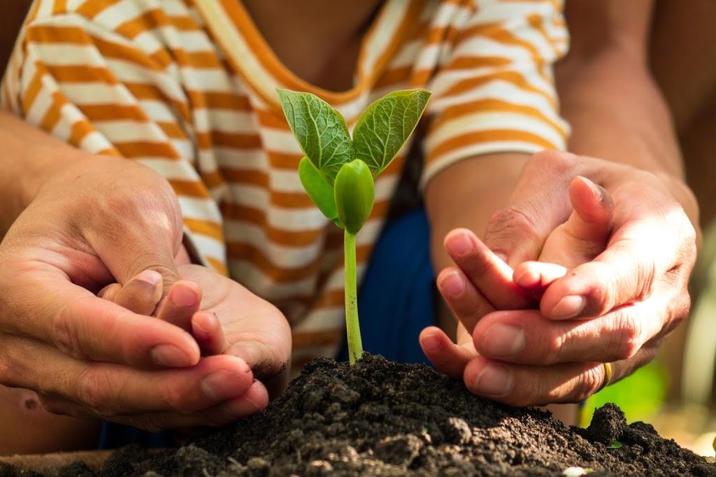 Speech Sprouts | health | 108 Aberdare St, Kurri Kurri NSW 2327, Australia | 0249375542 OR +61 2 4937 5542