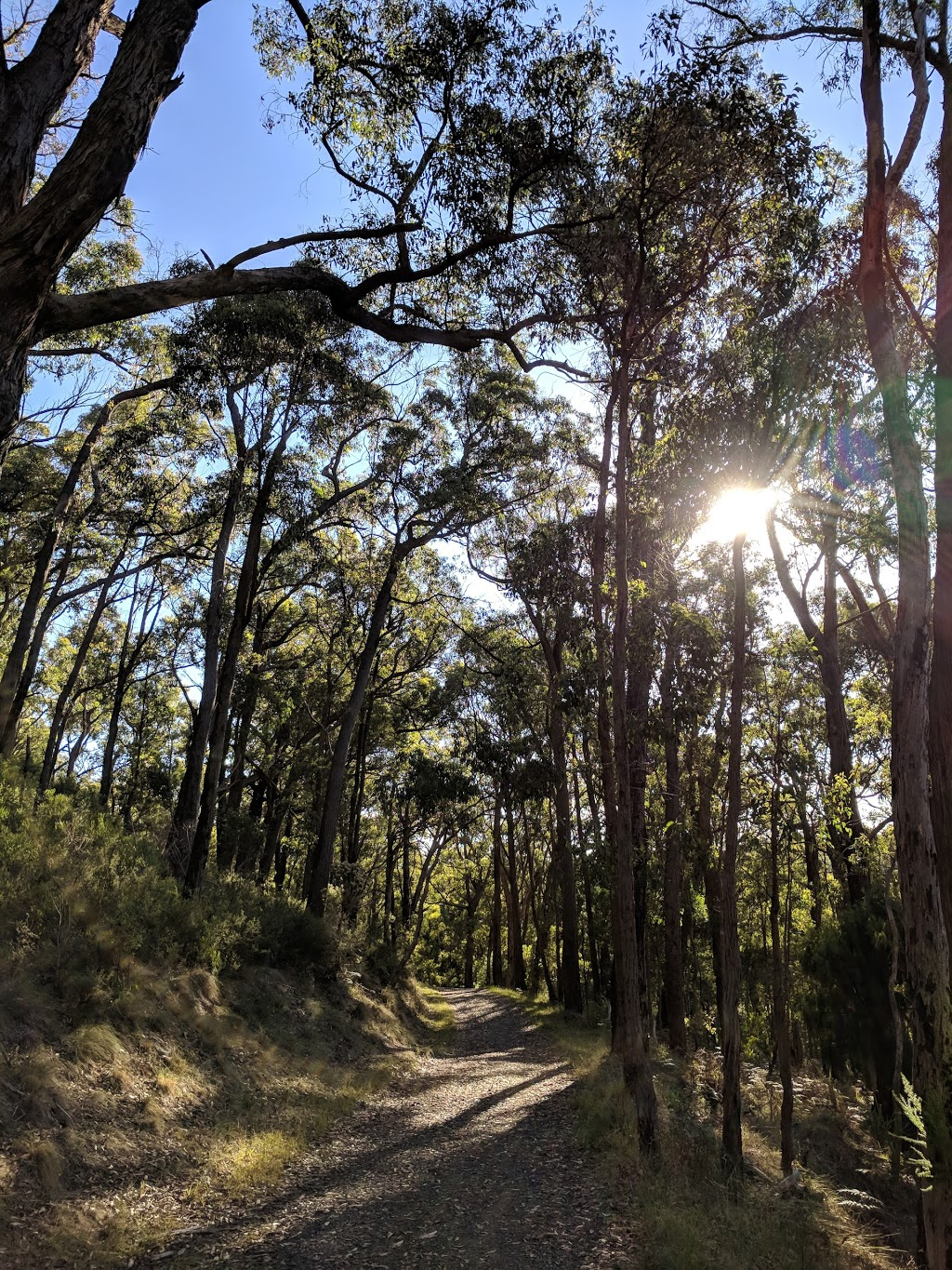 Feather Track | park | Feather Track, Tremont VIC 3785, Australia