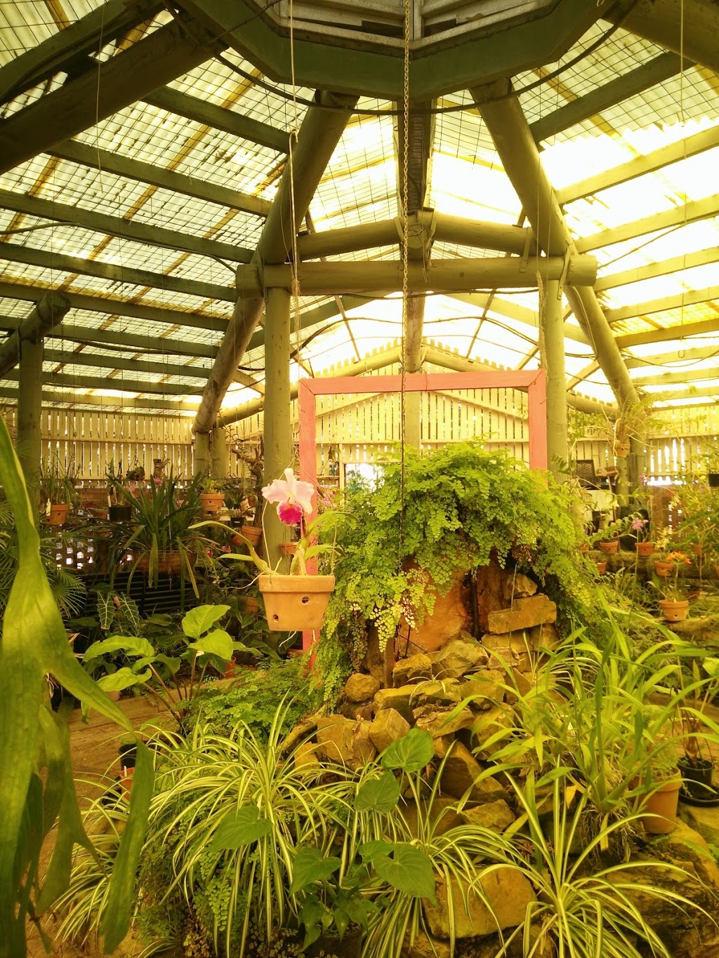 Mackay Orchid House | museum | Queens Park, Goldsmith St, Mackay QLD 4740, Australia | 1300622529 OR +61 1300 622 529