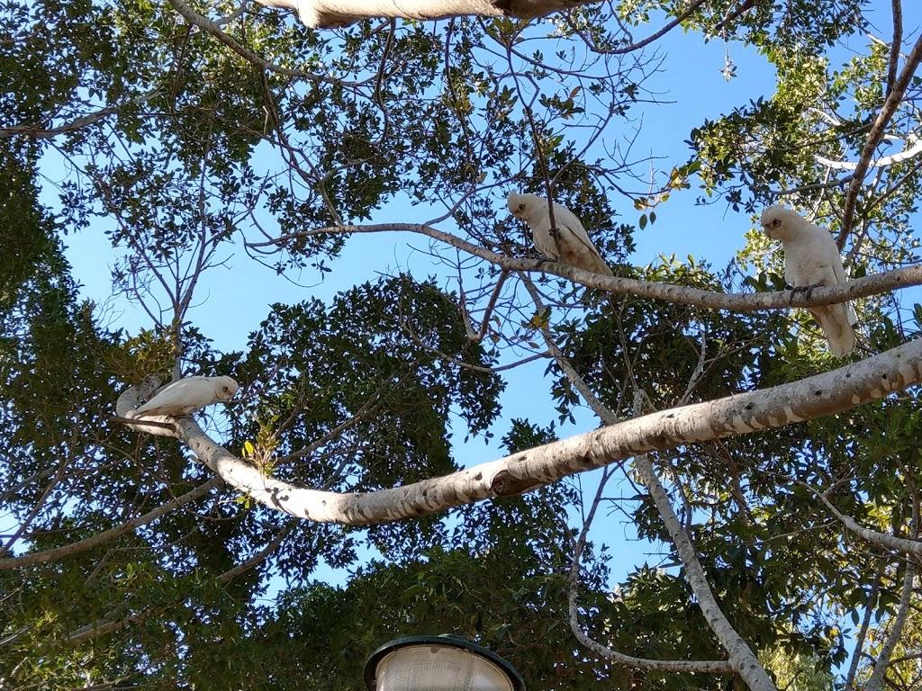 Cascade Gardens - Park | 2690 Gold Coast Hwy, Broadbeach ...