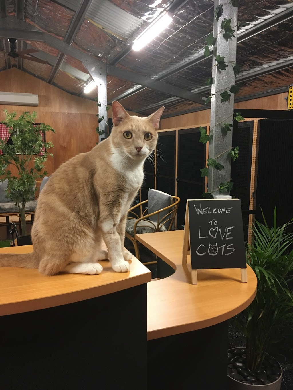 Love Cats Bed n Breakfast | veterinary care | 11 Dicksons Rd, Jilliby NSW 2259, Australia | 0412999505 OR +61 412 999 505