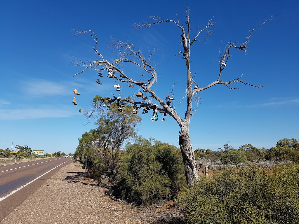 Shoe Tree | gym | LOT 1, LOT 1 Lincoln Hwy, Cultana SA 5600, Australia