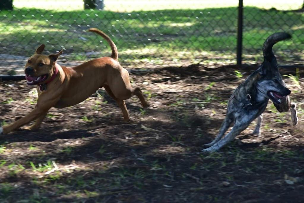 East Brisbane Dog Park | park | 162/166 Baines St, East Brisbane QLD 4169, Australia