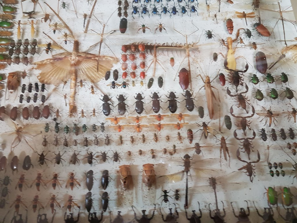 Ayr Nature Display | museum | 119 Wilmington St, Ayr QLD 4807, Australia | 0747832189 OR +61 7 4783 2189
