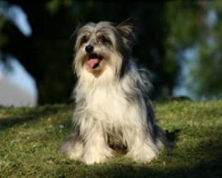 Latrobe Veterinary Group | veterinary care | 19 Hoyle St, Morwell VIC 3840, Australia | 0351338005 OR +61 3 5133 8005