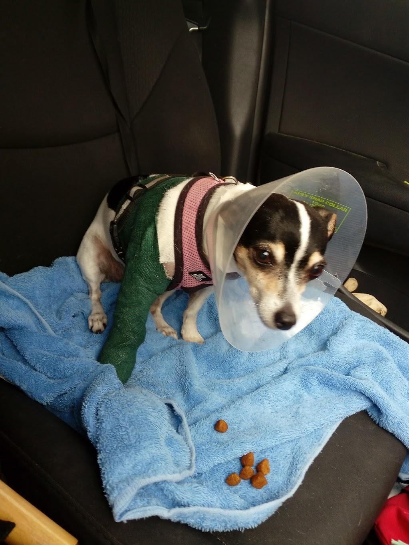 Camvet | veterinary care | 476 Ocean Dr, Laurieton NSW 2444, Australia | 0265599828 OR +61 2 6559 9828