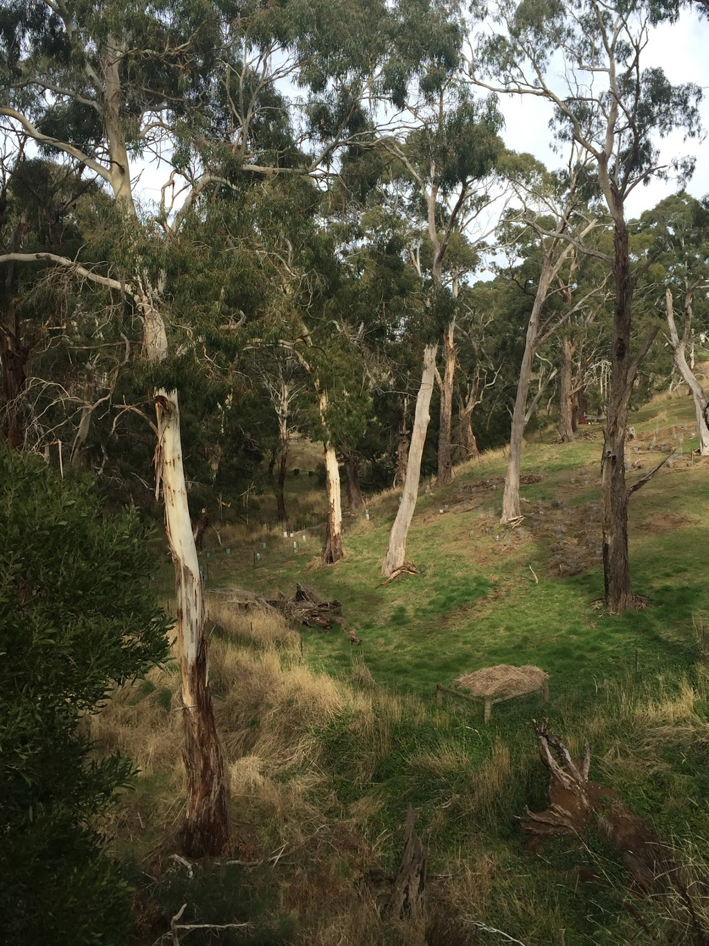 Glenlyon Biolink Walk (Loddon River Bridge to Recreation