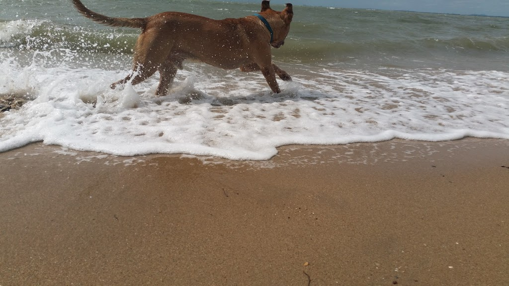 Ninjas Dog Beach Strip | park | 32 Hornibrook Esplanade, Clontarf QLD 4019, Australia