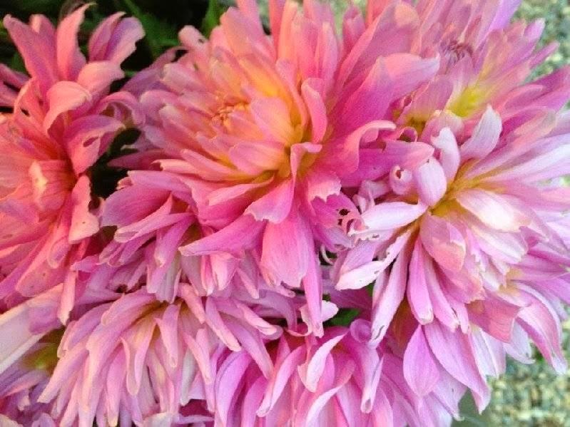 The Road Stall - Monbulk   florist   435 Monbulk Rd, Monbulk VIC 3793, Australia   0459737855 OR +61 459 737 855
