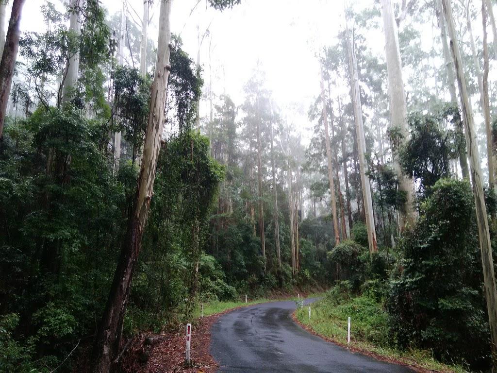 Yabbra National Park   park   Yabbra NSW 2469, Australia