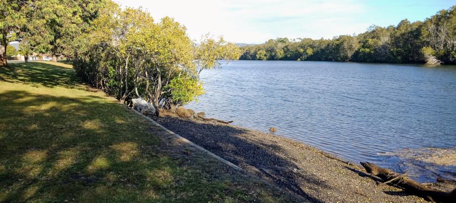 Gold Coast Fishing Spots - Creekside Park | park | Chestnut St, Elanora QLD 4221, Australia
