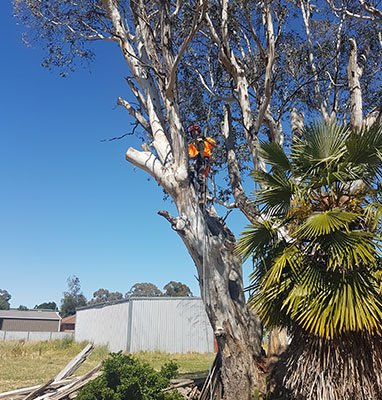 Lachlan Valley Tree Services   point of interest   10544 Mid Western Hwy, Cowra NSW 2794, Australia   0414702502 OR +61 414 702 502