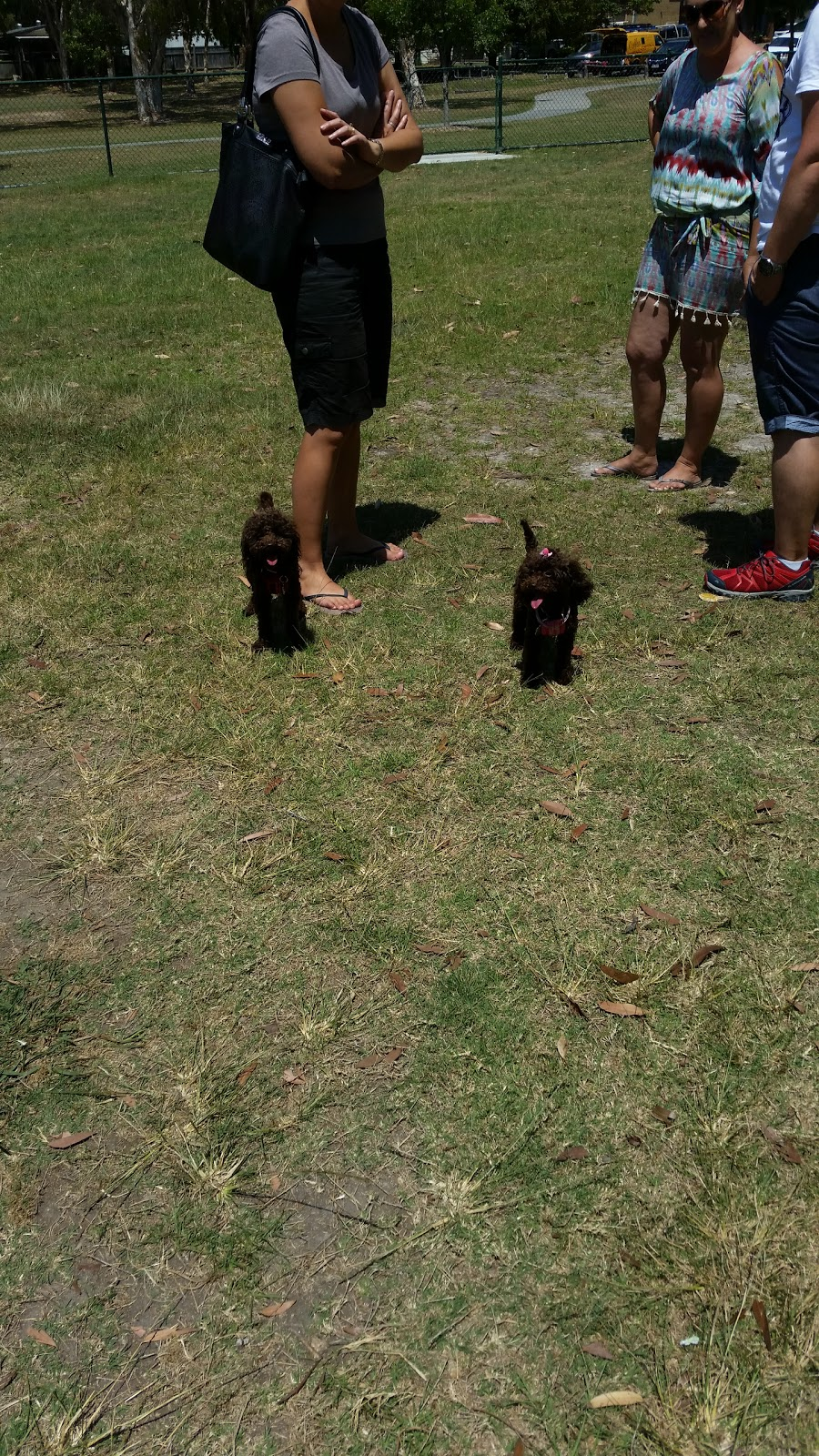 Labrador Fenced Agility Dog Park | park | k5 Pomona Terrace, Labrador QLD 4215, Australia