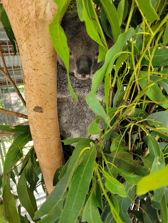 Moggill Koala Rehabilitation Centre   hospital   55 Priors Pocket Rd, Moggill QLD 4070, Australia   1300130372 OR +61 1300 130 372