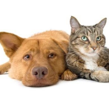 Banksia Grove Veterinary Hospital | veterinary care | 1001 Joondalup Dr, Banksia Grove WA 6031, Australia | 0893062555 OR +61 8 9306 2555