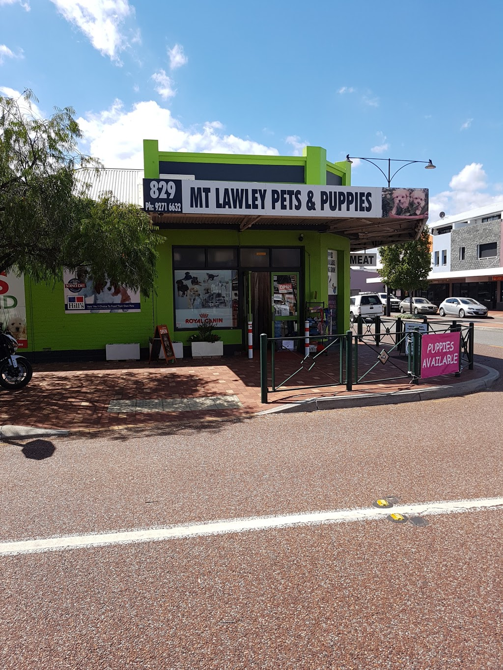 Mt Lawley Pets & Puppies | pet store | 829 Beaufort St, Inglewood WA 6052, Australia | 0892716632 OR +61 8 9271 6632