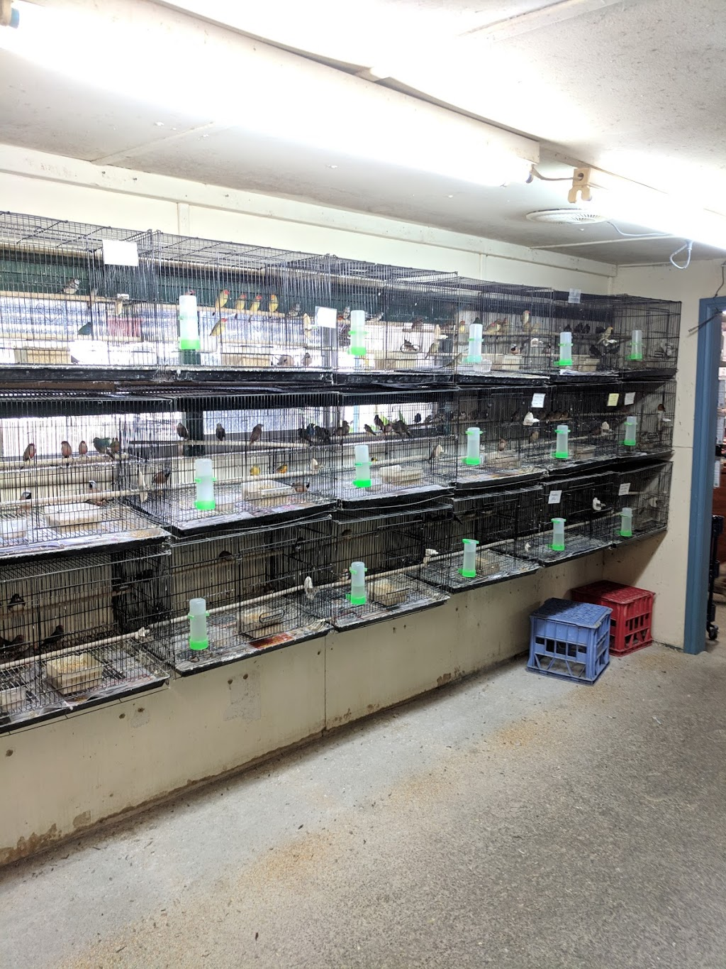 Ace Colony Birds | pet store | 258 Great Western Hwy, Wentworthville NSW 2145, Australia | 0296350598 OR +61 2 9635 0598