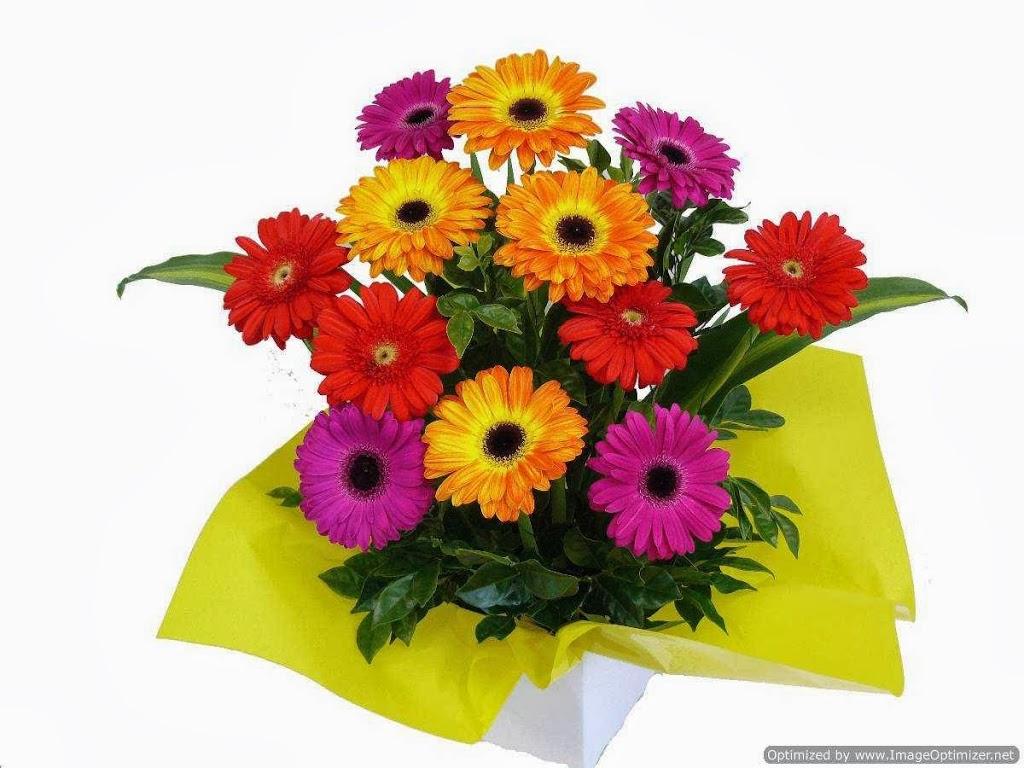 Wilson Roses | florist | 1216 Farnborough Rd, Yeppoon QLD 4703, Australia | 1800976737 OR +61 1800 976 737