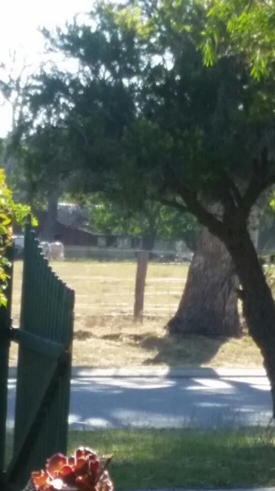 Treehouse Granny Flat | lodging | 62 Swan View Rd, Swan View WA 6056, Australia | 0400956500 OR +61 400 956 500