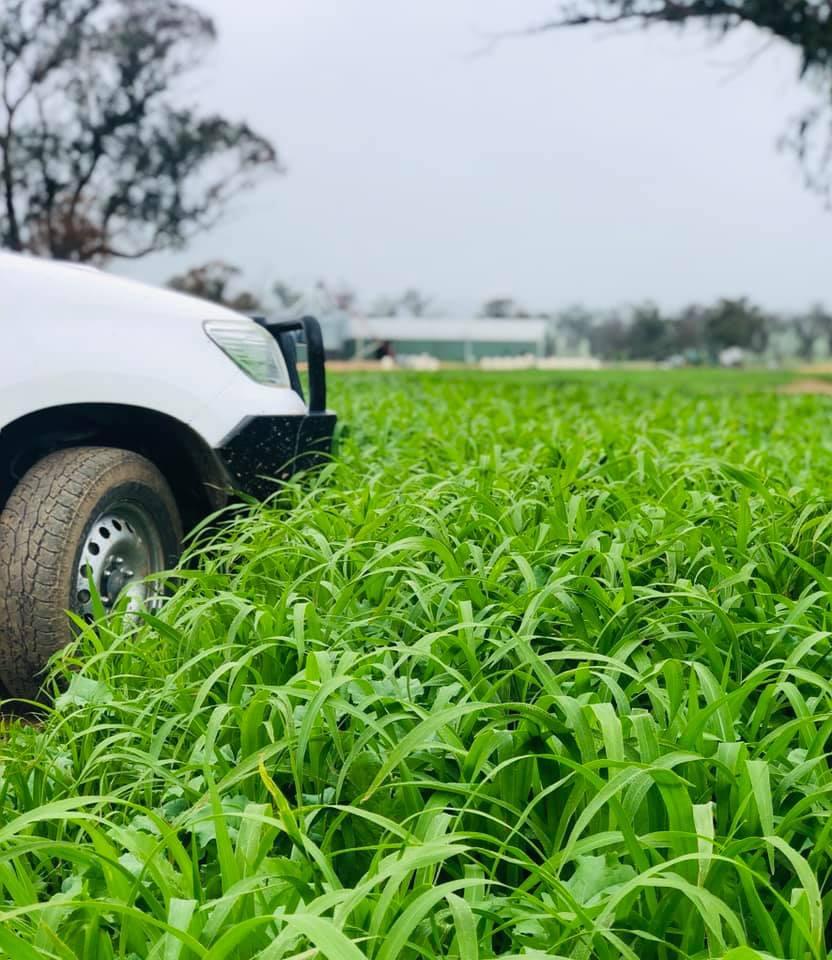 Notman Pasture Seeds (Warrnambool) | food | 1499 Hopkins Hwy, Purnim VIC 3278, Australia | 0408439795 OR +61 408 439 795