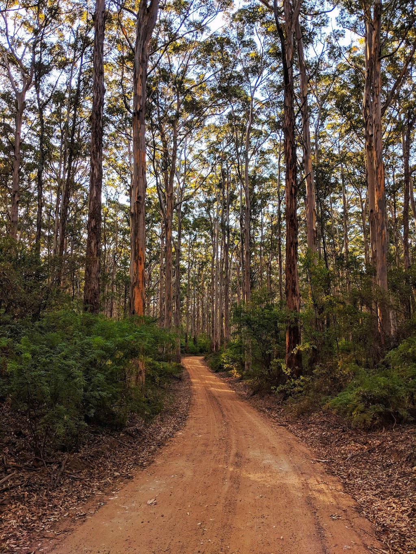 State Forest No 45 | park | Boranup WA 6286, Australia