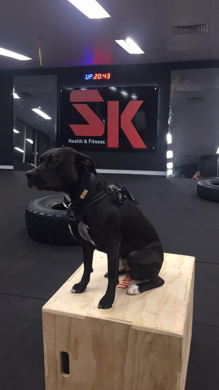 S.K Health and Fitness | health | 4/223 ORiordan St, Mascot NSW 2020, Australia | 0401935558 OR +61 401 935 558