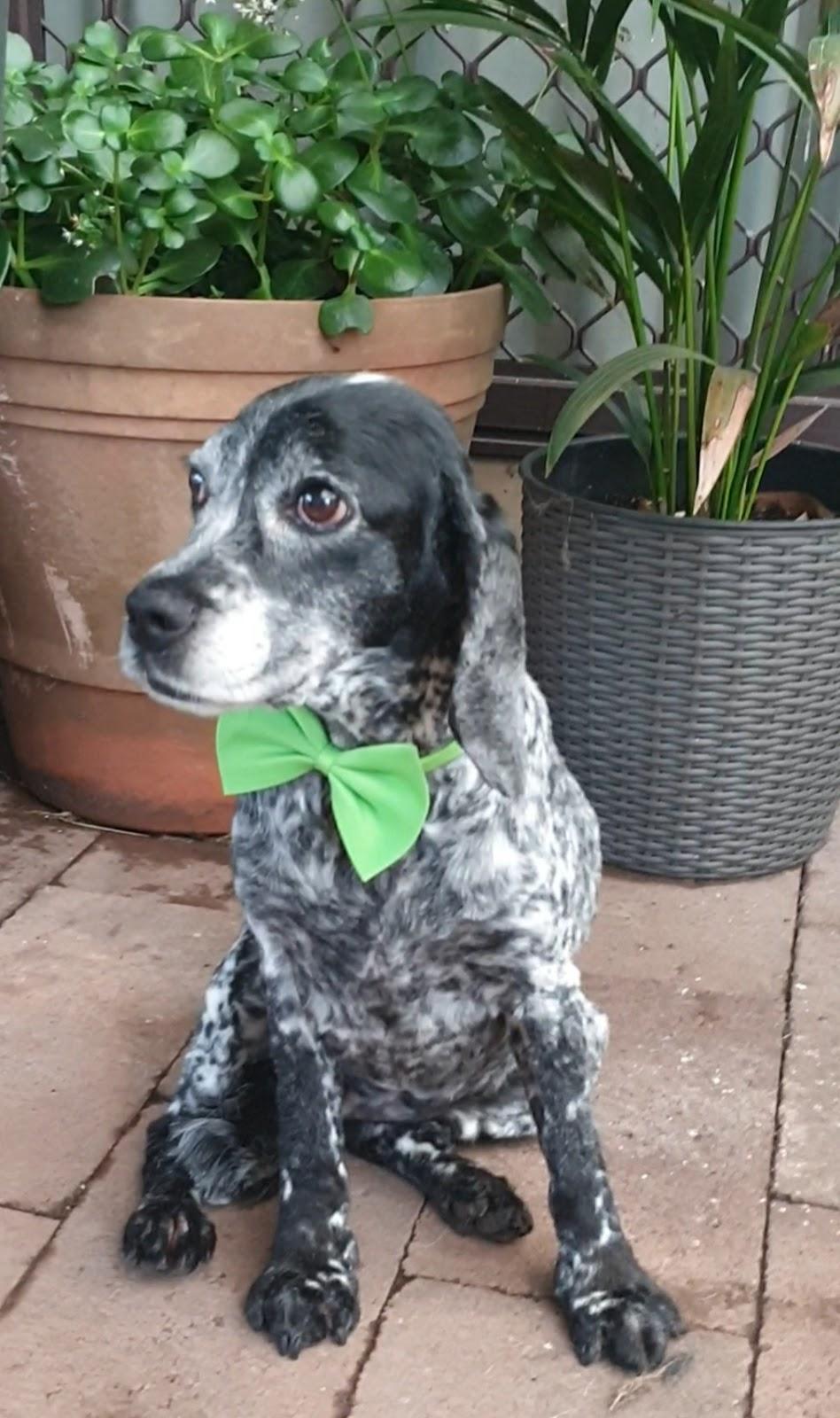 Happy dog pet grooming   point of interest   64 Radfords Rd, Nirranda South VIC 3268, Australia   0457807589 OR +61 457 807 589