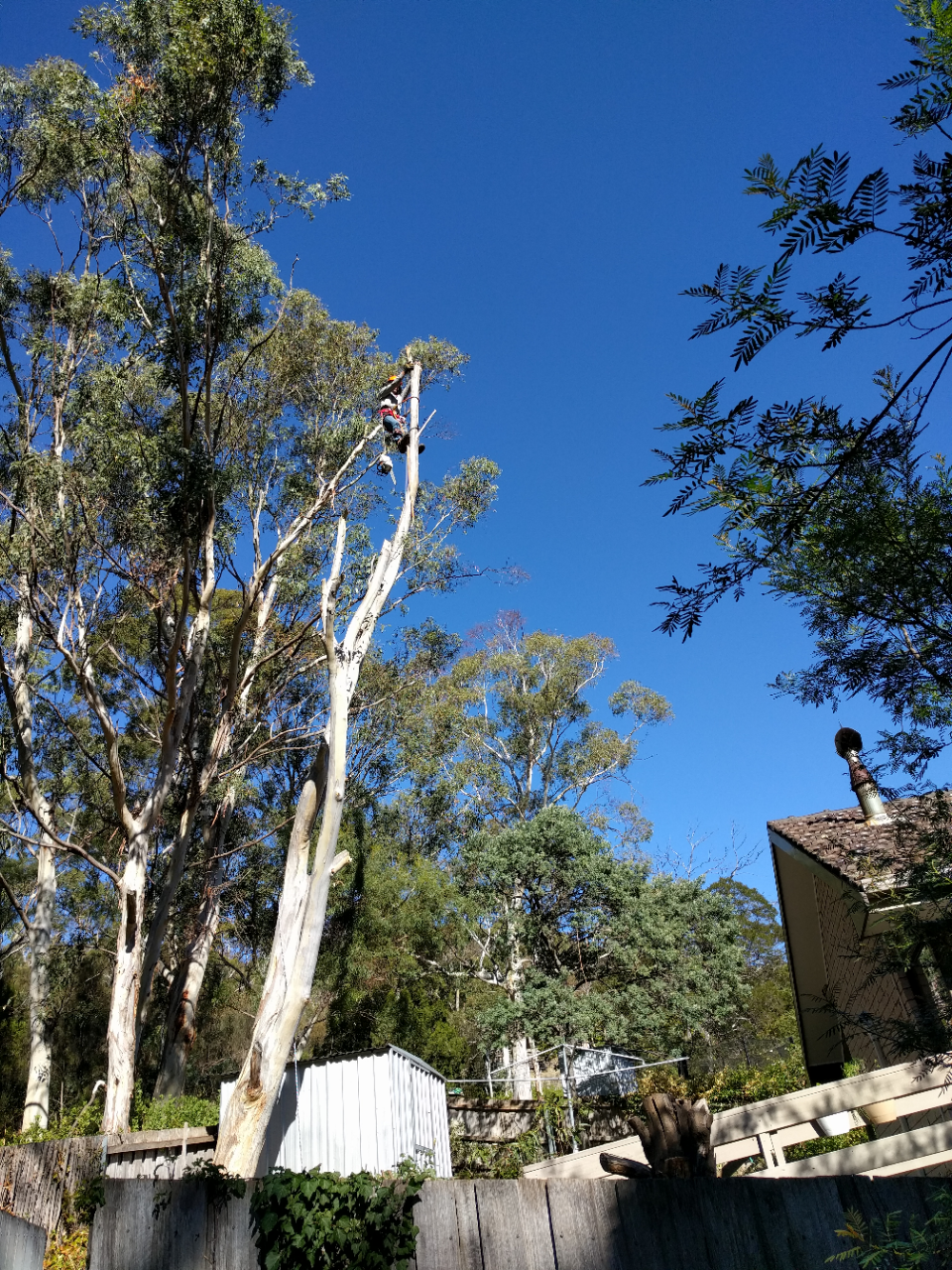 Treemania -Tree Removal & Pruning | moving company | 305 Strickland Ave, South Hobart TAS 7004, Australia | 0498261690 OR +61 498 261 690