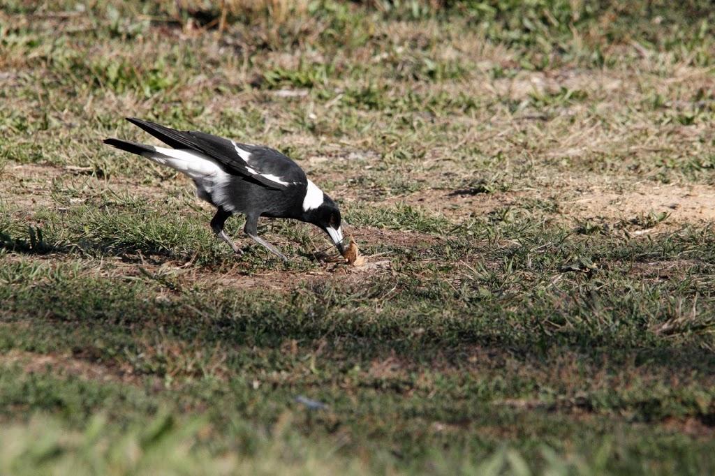 Ploughmans Wetlands | park | Orange NSW 2800, Australia