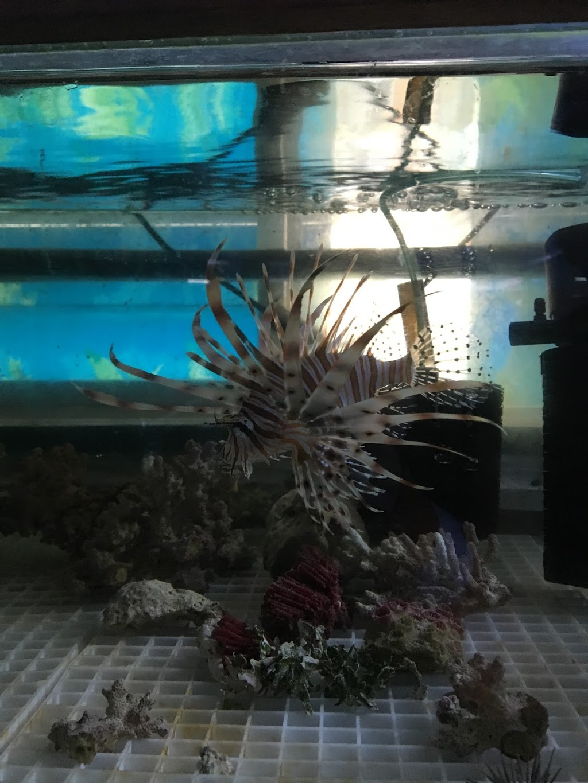 Cheungs Aquarium Pet Warehouse Pet Store 887 Main N Rd Pooraka Sa 5095 Australia
