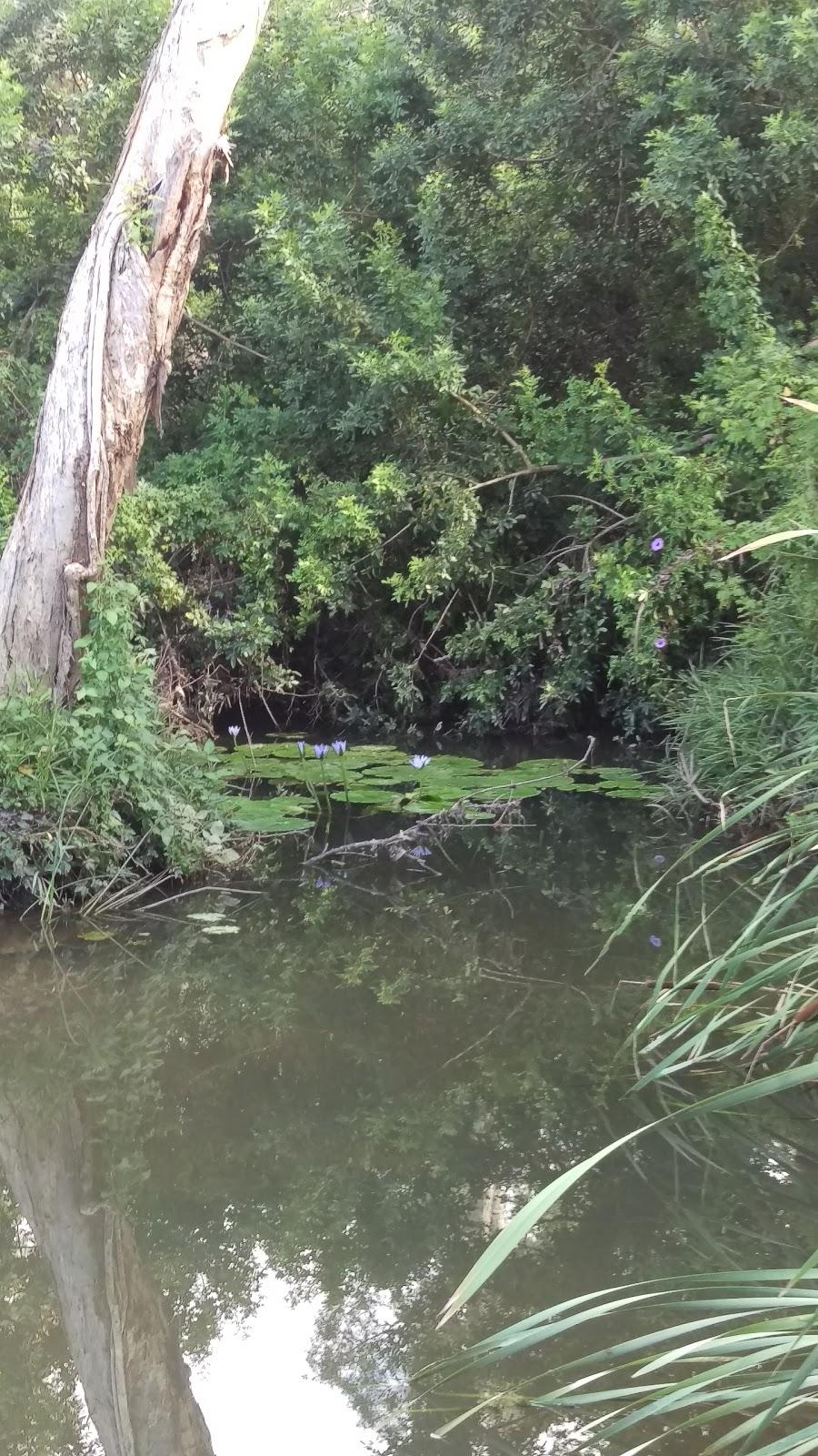 Baxters Reserve | park | Seventeen Mile Rocks QLD 4073, Australia | 0734038888 OR +61 7 3403 8888