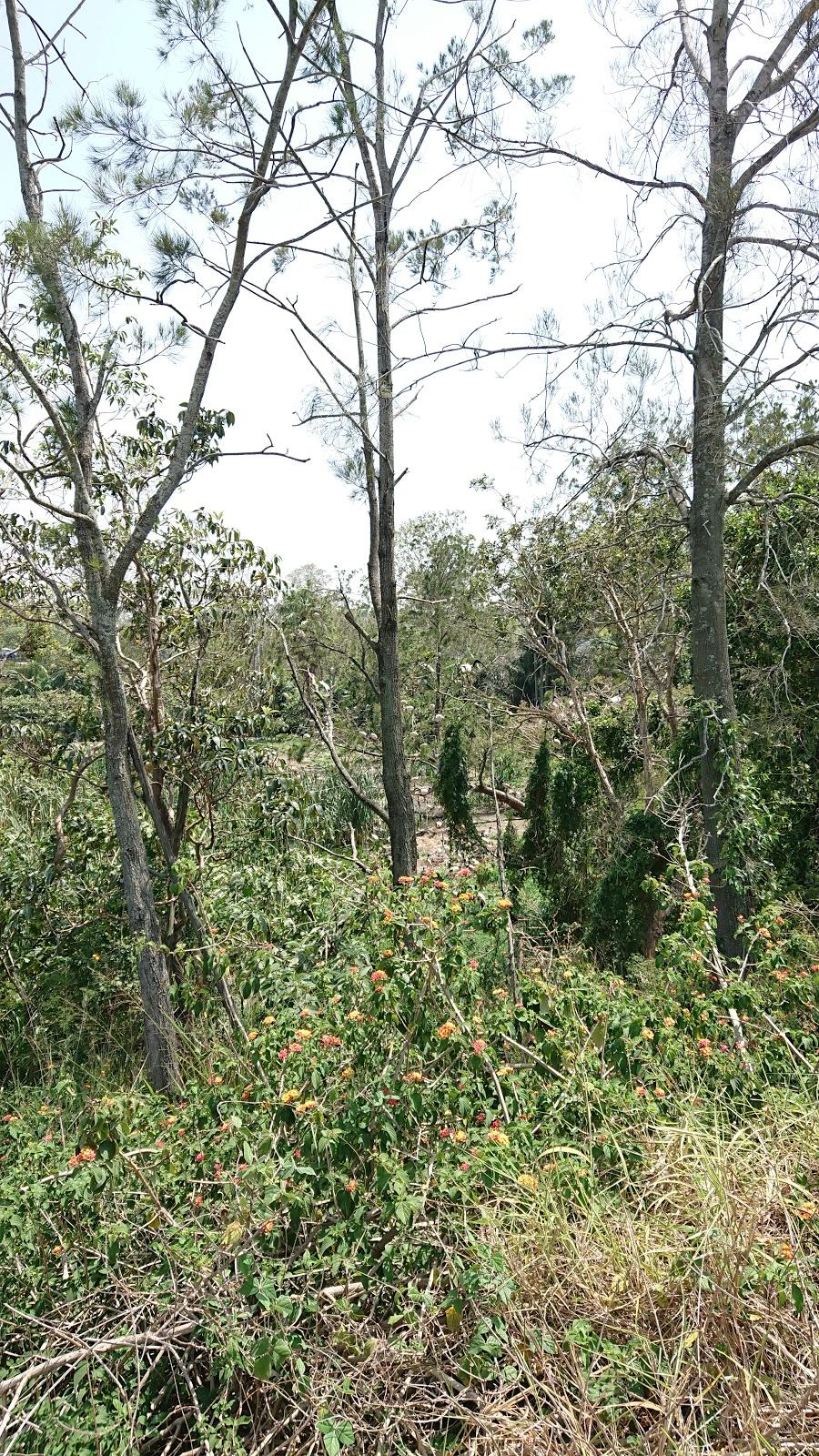 Bin Chicken Paradise | lodging | Mandew St, Shailer Park QLD 4128, Australia | 0738065921 OR +61 7 3806 5921
