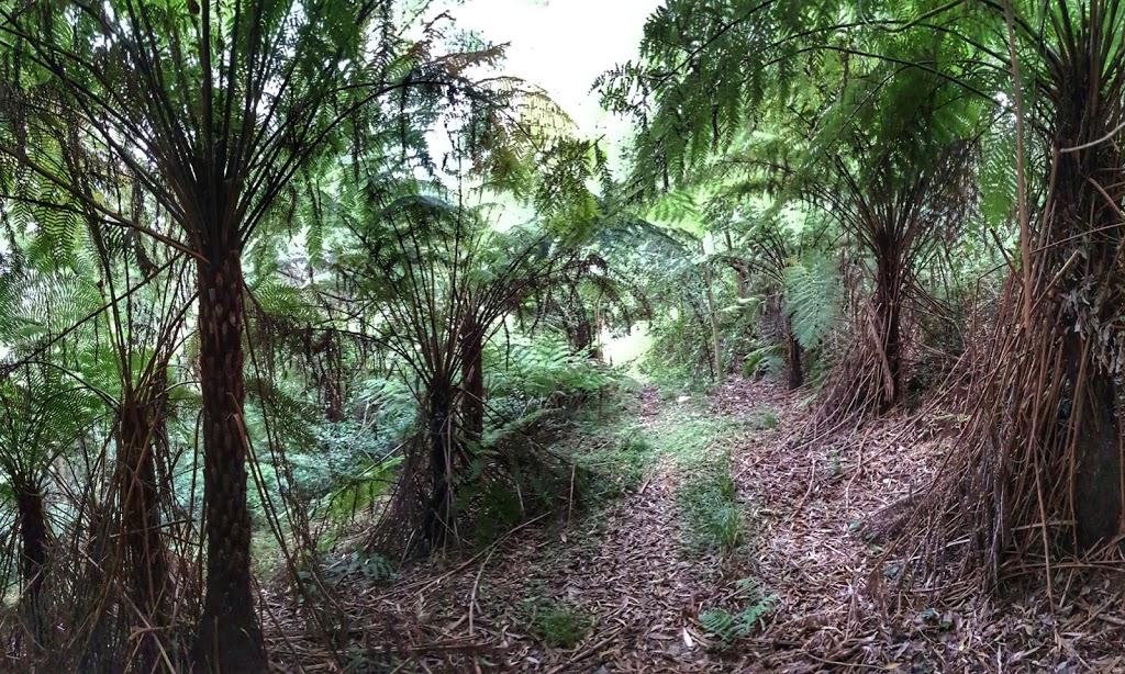 Bundewallah Reserve Walking Track | park | Bundewallah NSW 2535, Australia
