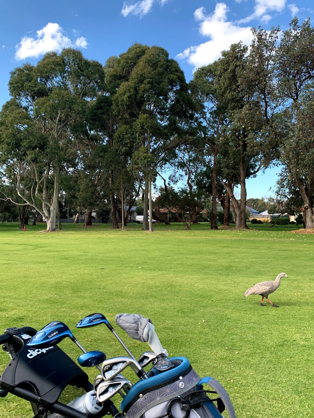 Phillip Island Golf Club   point of interest   34-44 Settlement Rd, Cowes VIC 3922, Australia   0359521121 OR +61 3 5952 1121