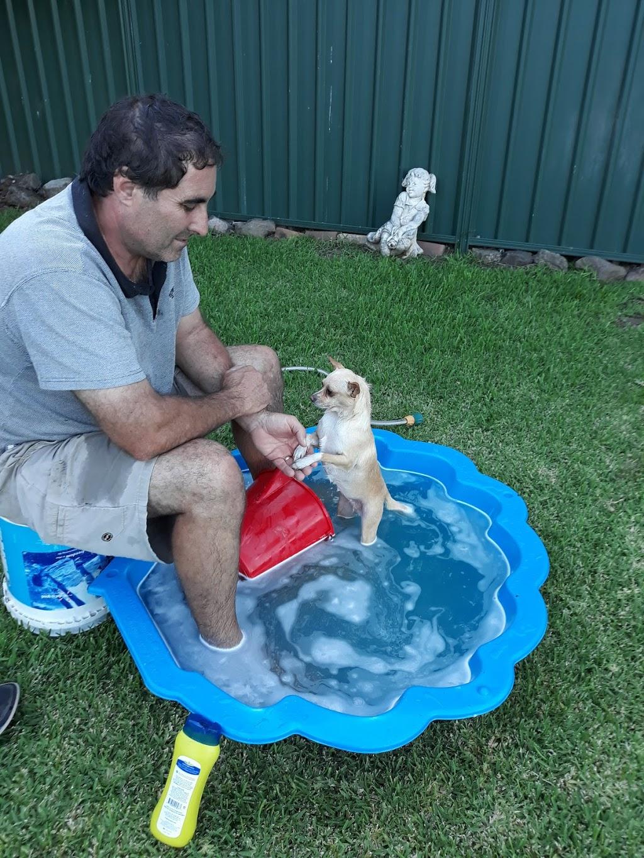 Petbarn Singleton | pet store | Rosepoint Centre, 17b/21 Ryan Ave, Singleton NSW 2330, Australia | 0265722000 OR +61 2 6572 2000