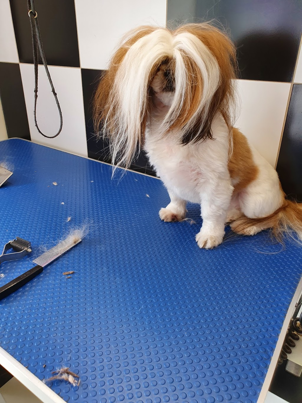 Maureen s Pet Grooming Parlour | point of interest | 37 Sutton Rd, Maryborough VIC 3465, Australia | 0414760698 OR +61 414 760 698