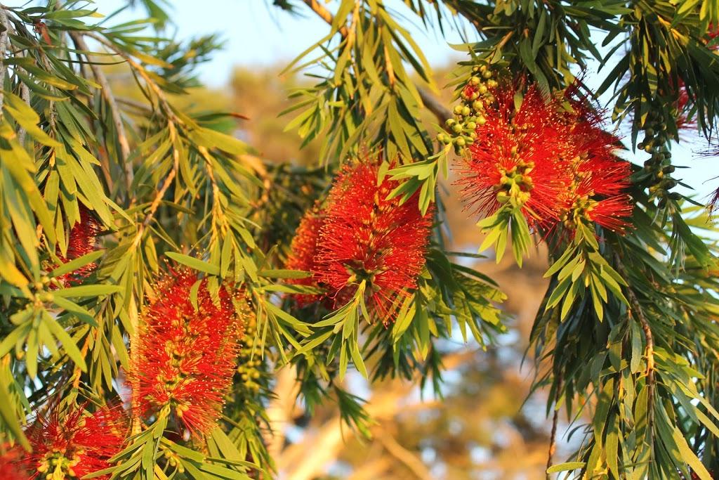 Saint Helens Park | park | North Geelong VIC 3215, Australia