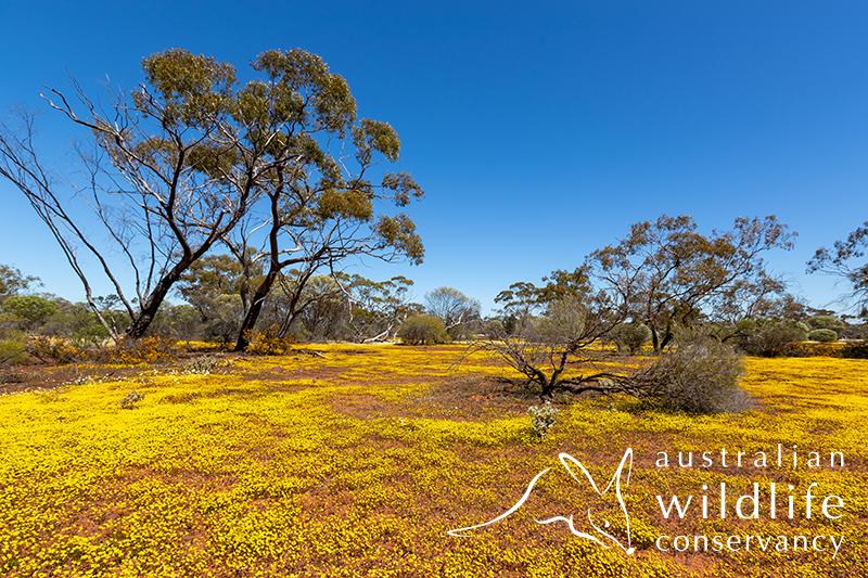 Mt Gibson- Quartz Ridge Campground | park | Mt Gibson Western, Paynes Find WA 6612, Australia