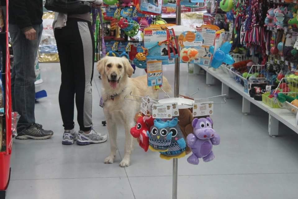 Platinum Pet Warehouse - Keilor Park | pet store | 6 Translink Dr, Keilor Park VIC 3042, Australia | 0393315773 OR +61 3 9331 5773