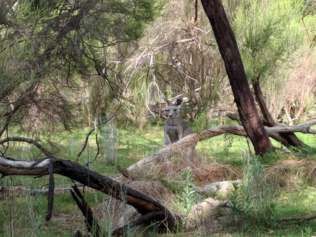 Reid Street Park | park | Reid St, South Morang VIC 3752, Australia | 0394010539 OR +61 3 9401 0539