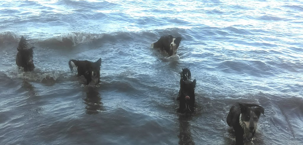 Bonnells Bay Dog Exercise Area | park | LOT 17, LOT 17 GRAND Parade W, Bonnells Bay NSW 2264, Australia | 0249210333 OR +61 2 4921 0333