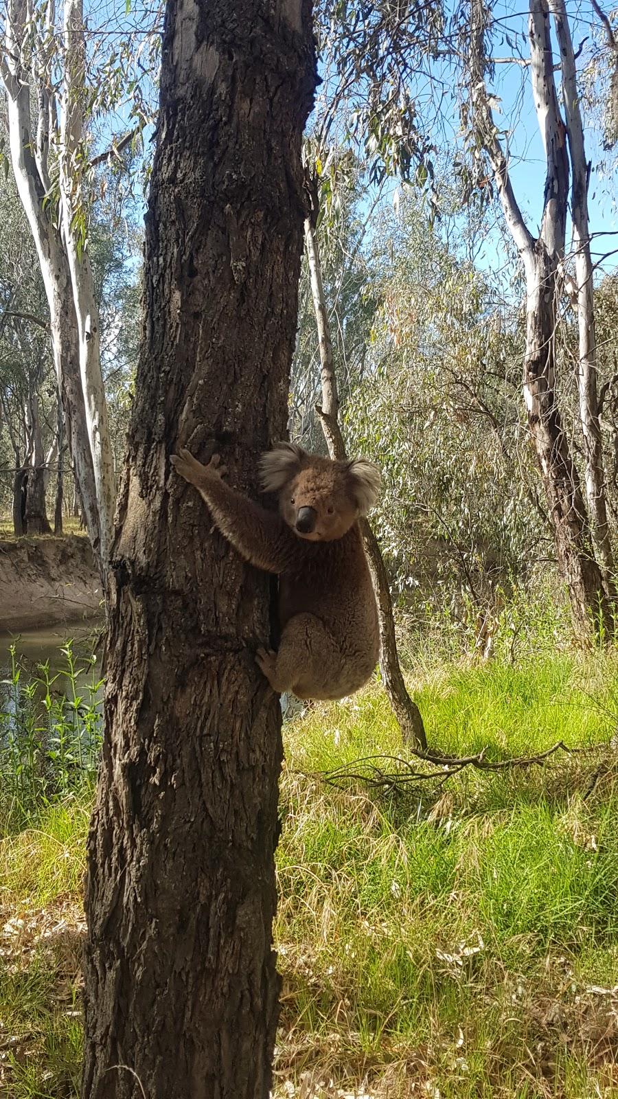 Gravel Point Warby-Ovens National Park | park | Killawarra VIC 3678, Australia