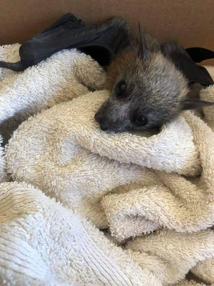 Russell Island Wildlife Rescue | park | 11 Jasper St, Russell Island QLD 4184, Australia | 0411267612 OR +61 411 267 612