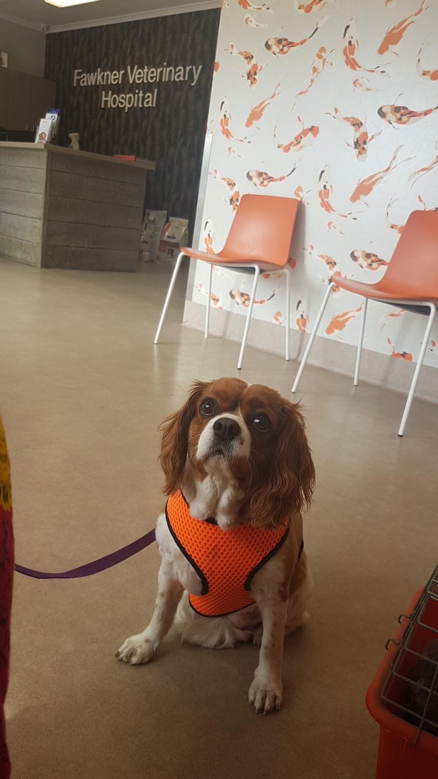 Fawkner Veterinary Hospital   veterinary care   1148 Sydney Rd, Fawkner VIC 3060, Australia   0393593474 OR +61 3 9359 3474